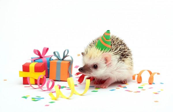 Fun Birthday Young Hedgehog Baby