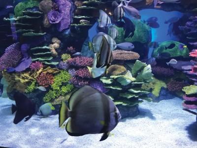 Ok Aquarium Polynesian Reef 2 L