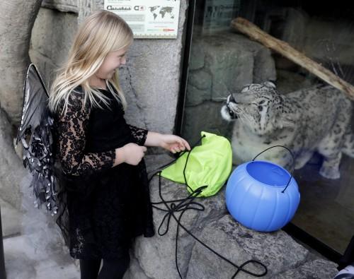 Tulsa Zoo Hallowzooeen